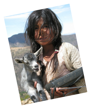 Campesino girl carrying a wounded lamb along the road to Totora - Une enfant Campesino portant un agneau blessé le long de la route de Totora